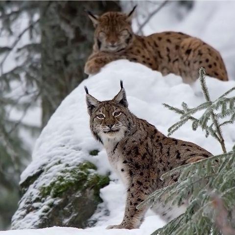 Wildlifetour: Tiere, Tierspuren und ihr Netzwerk